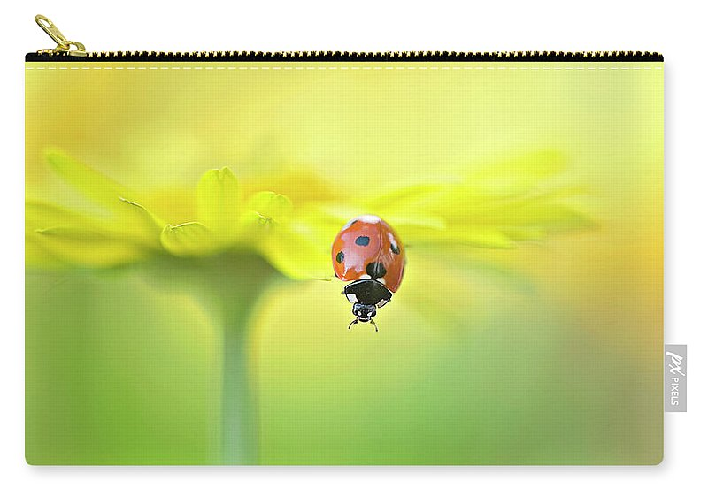 Buckinghamshire Carry-all Pouch featuring the photograph Seven Spot Ladybird On Yellow Flower by Jacky Parker Photography