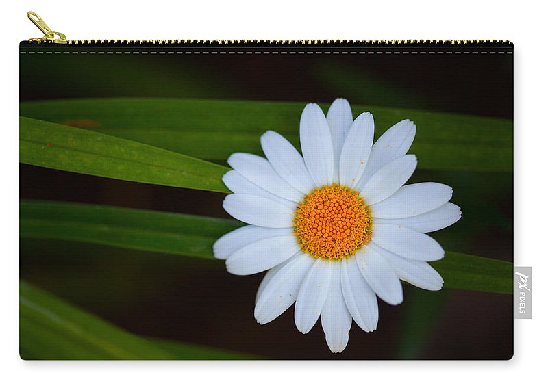 Single Carry-all Pouch featuring the photograph Sharing The Space by Karol Livote
