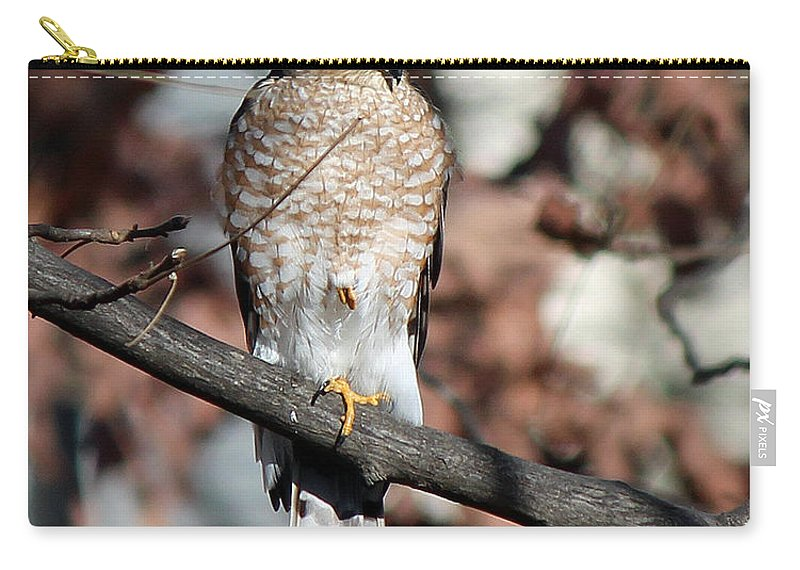 Hawk Carry-all Pouch featuring the photograph Sharp-shinned Hawk 3 by Jamie Smith