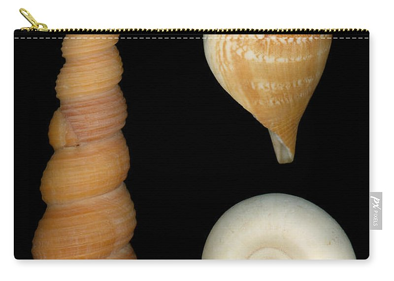 Savad Carry-all Pouch featuring the photograph Shell - Conchology - Shells by Mike Savad