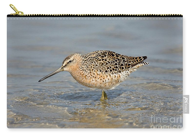 Animal Carry-all Pouch featuring the photograph Short-billed Dowitcher, Breeding by Anthony Mercieca