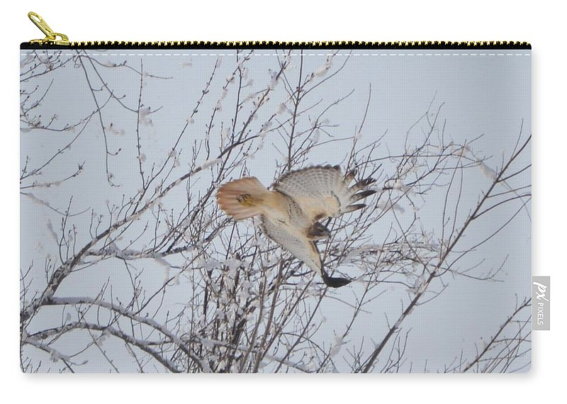 Red Tail Hawk Carry-all Pouch featuring the photograph Showing Off by Bonfire Photography