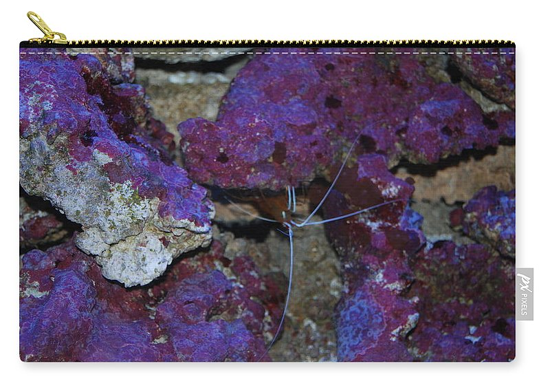 Taken Through Side Of Aquarium Carry-all Pouch featuring the photograph Shrimp by Robert Floyd