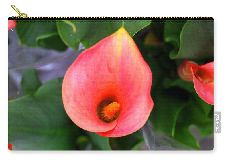 Carry-all Pouch featuring the photograph shy by Riad Belhimer