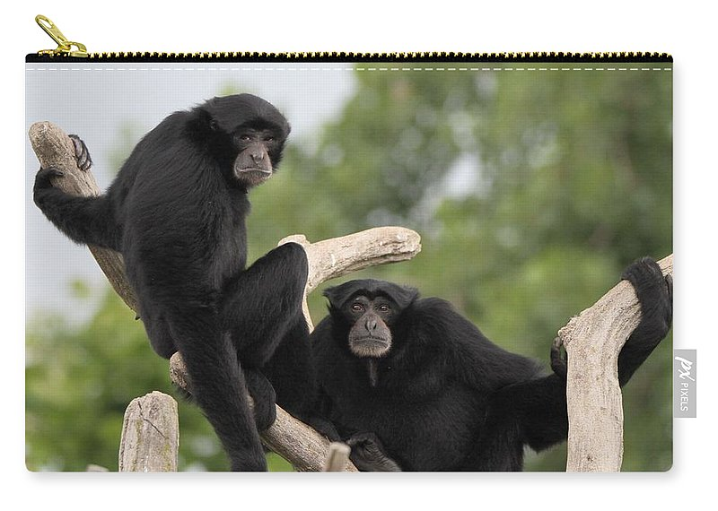 Siamang Monkeys Carry-all Pouch featuring the photograph Siamang Monkeys by Dan Sproul