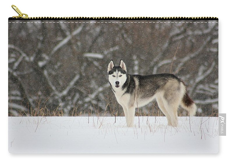 Landscape Carry-all Pouch featuring the photograph I've Been Spotted by David Dunham
