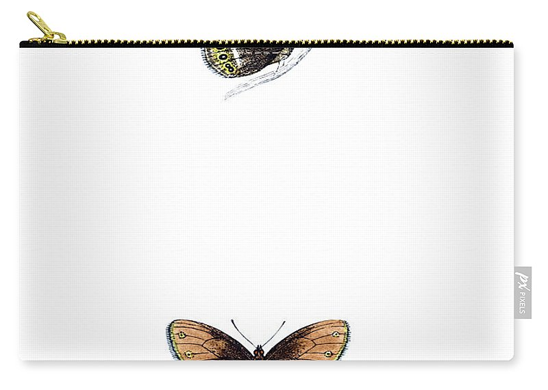 Engraving Carry-all Pouch featuring the photograph Silver Bordered Ringlet - Hand Coloured by Andrew howe