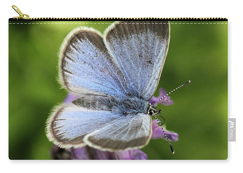 Glaucopsyche Lygdamus Carry-all Pouch featuring the photograph Silvery Blue Butterfly by Doris Potter