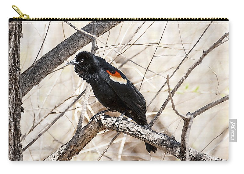 Spring Carry-all Pouch featuring the photograph Singing A Song by Edward Peterson