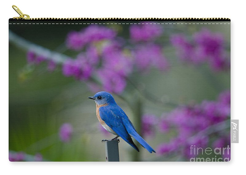 Blue Bird Carry-all Pouch featuring the photograph Singing Blue Bird by Dale Powell