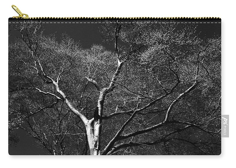 Art Carry-all Pouch featuring the photograph Single Tree With New Spring Leaves In Black And White by Randall Nyhof