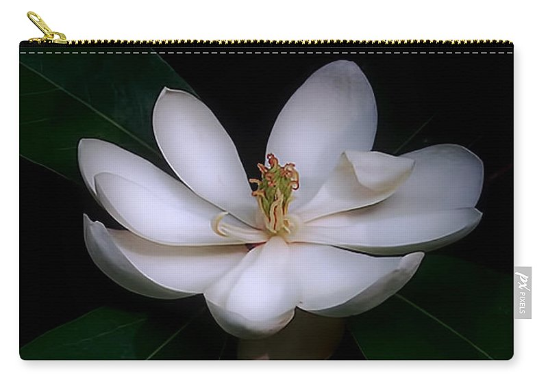Flower Carry-all Pouch featuring the photograph Sweet White Magnolia Bloom by Louise Kumpf