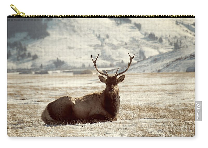 Animal Carry-all Pouch featuring the photograph Sitting Bull Elk by Juli Scalzi