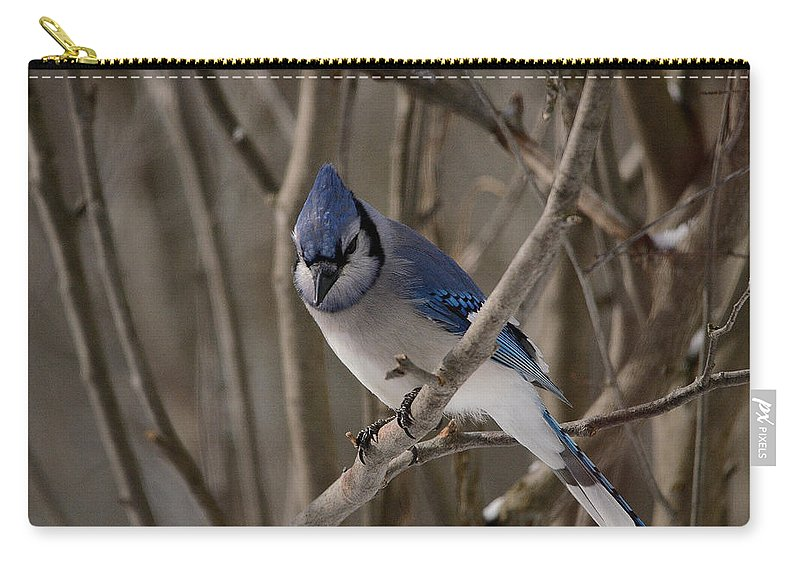 Blue Jay Carry-all Pouch featuring the photograph Sitting Pretty by David Porteus