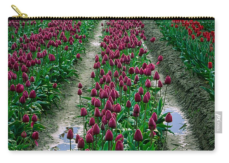 America Carry-all Pouch featuring the photograph Skagit Valley Tulips by Inge Johnsson
