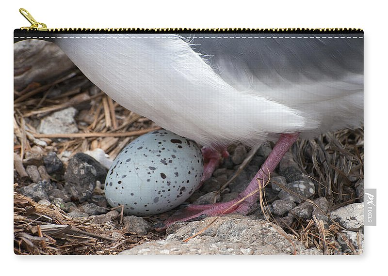 Plazas Island Galapagos Islands Ecuador Bird Egg Eggs Birds Animal Animals Wing Wings Feather Feathers Carry-all Pouch featuring the photograph Slightly Cracked by Bob Phillips
