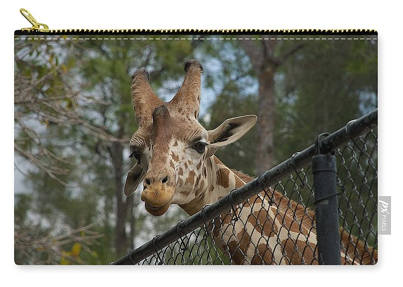 Chain Link Carry-all Pouch featuring the photograph Snacks by Joseph Yarbrough
