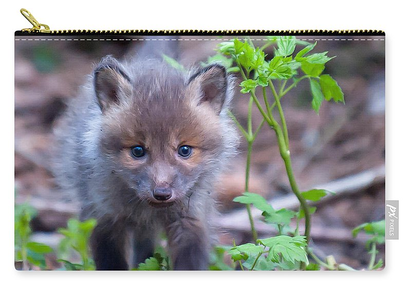 Sneaking Carry-all Pouch featuring the photograph Sneaking by Torbjorn Swenelius
