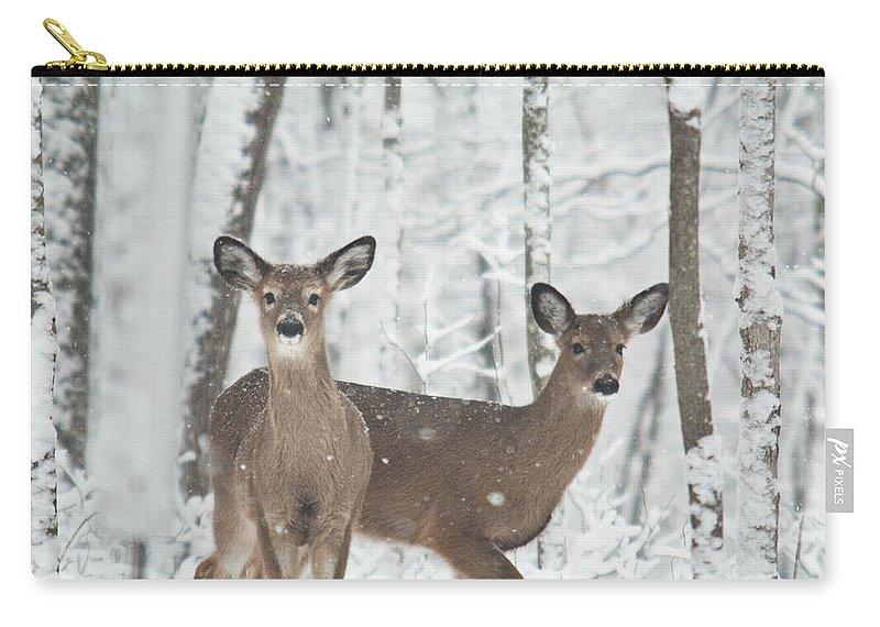 Deer Carry-all Pouch featuring the photograph Snow Deer by Douglas Barnett