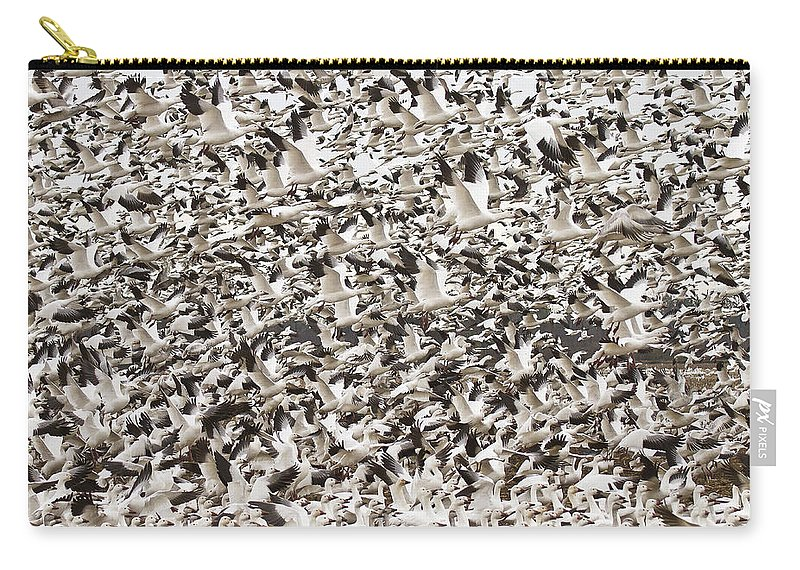 Snow Geese Carry-all Pouch featuring the photograph Snow Geese Blast Off by Bill Swindaman