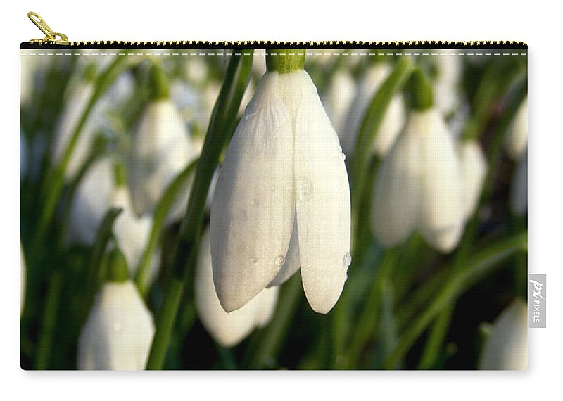 Snowdrops Carry-all Pouch featuring the photograph Snowdrops by Nina Ficur Feenan
