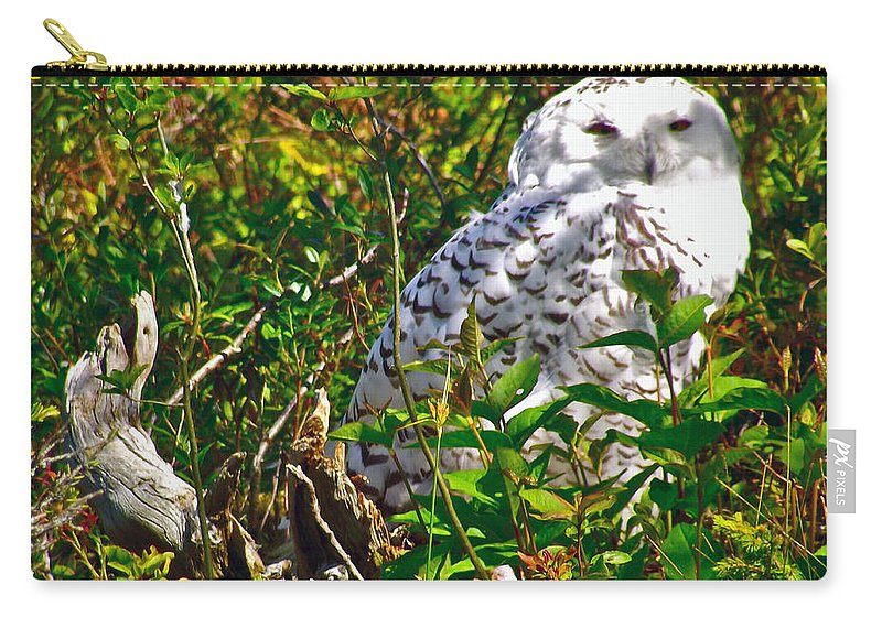 Snowy Owl In Salmonier Nature Park Carry-all Pouch featuring the photograph Snowy Owl In Salmonier Nature Park-nl by Ruth Hager