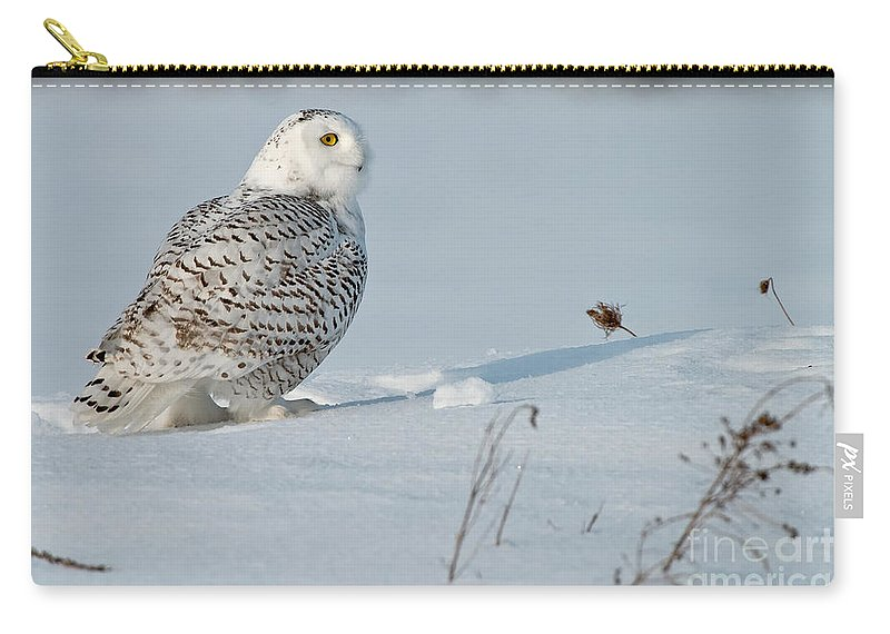 Snowy Owl Carry-all Pouch featuring the photograph Snowy Owl Pictures 53 by World Wildlife Photography