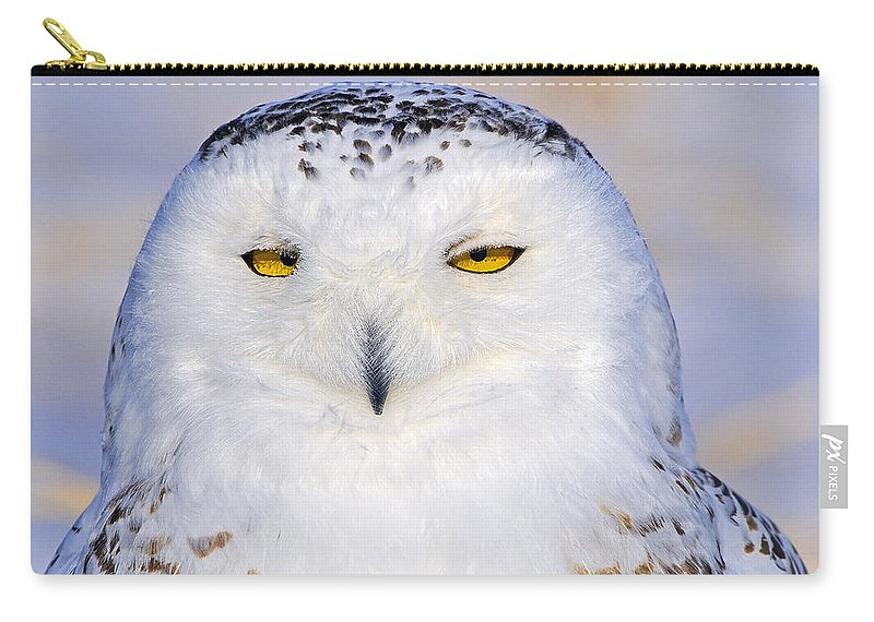 Snowy Owl Carry-all Pouch featuring the photograph Snowy Owl Portrait by Tony Beck