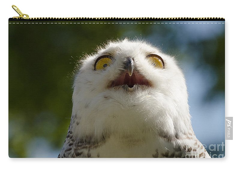 Snowy Carry-all Pouch featuring the photograph Snowy Owl With Big Eyes by Les Palenik