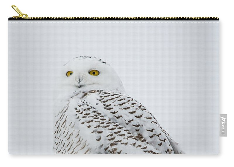 Field Carry-all Pouch featuring the photograph Snowy Portrait by Cheryl Baxter