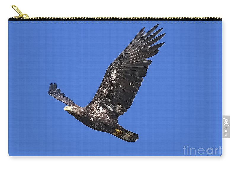 Bald Eagle Carry-all Pouch featuring the photograph Soar Like An Eagle by Sharon Talson