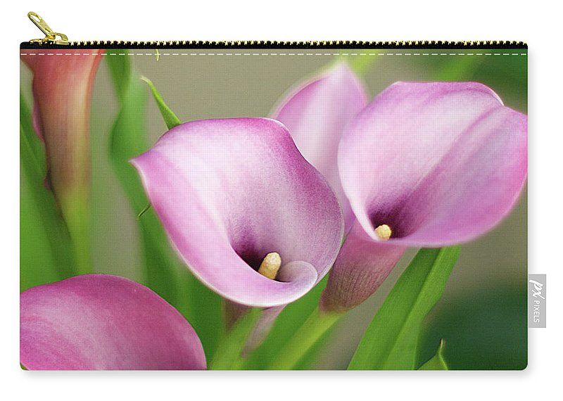 Calla Lily Carry-all Pouch featuring the photograph Soft Pink Calla Lilies by Byron Varvarigos