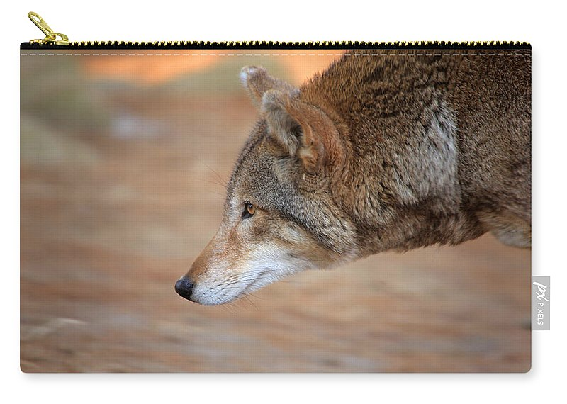 Wolf Carry-all Pouch featuring the photograph Something Got Her Attention by Karol Livote