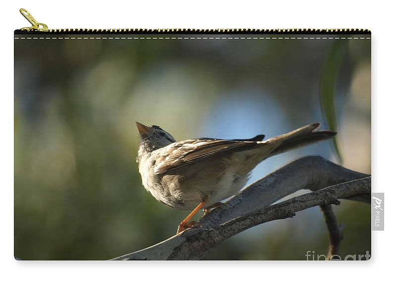Bird Carry-all Pouch featuring the photograph Sparrow by Jacklyn Duryea Fraizer