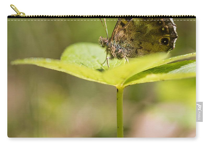 Bulgaria Carry-all Pouch featuring the photograph Speckled Wood Butterfly by Jivko Nakev