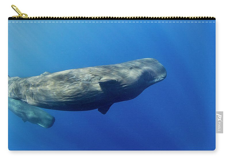 Underwater Carry-all Pouch featuring the photograph Sperm Whale Pyseter Macrocephalus by Stephen Frink