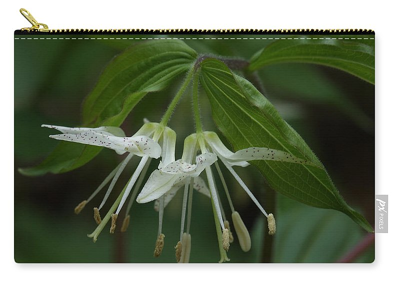 Spotted Mandrin Carry-all Pouch featuring the photograph Spotted Mandrin . Disporum Maculatum by Daniel Reed