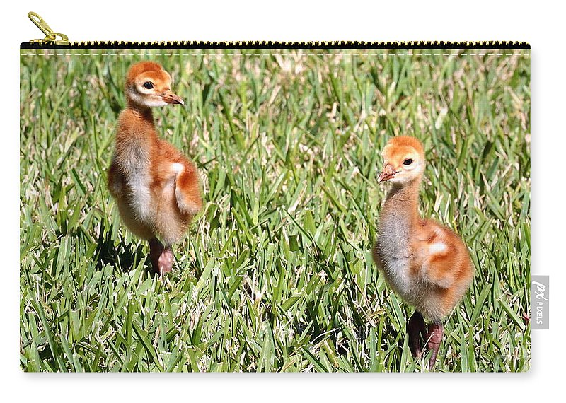 Sandhill Crane Chicks Carry-all Pouch featuring the photograph Spring Chicks by Carol Groenen