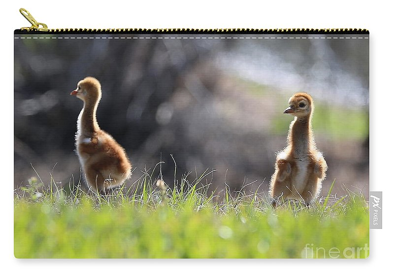 Sandhill Crane Chicks Carry-all Pouch featuring the photograph Spring Chicks In The Sunshine by Carol Groenen