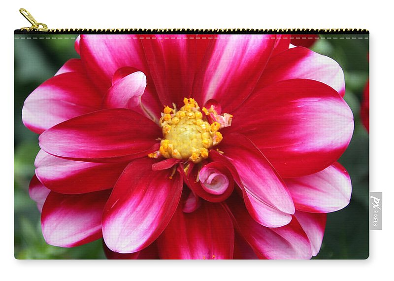 Beautiful Carry-all Pouch featuring the photograph Spring Flower 1 by Bob Slitzan