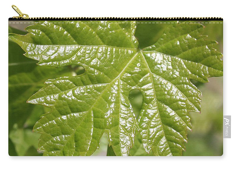 Spring Leaf Carry-all Pouch featuring the photograph Spring Grape Leaf by Carol Groenen