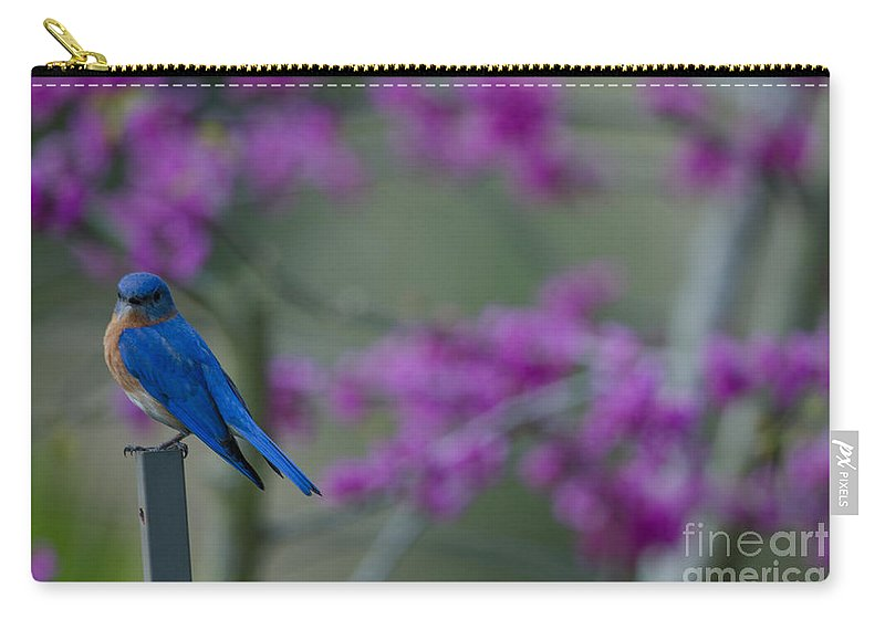 Blue Bird Carry-all Pouch featuring the photograph Spring Is Bursting by Dale Powell