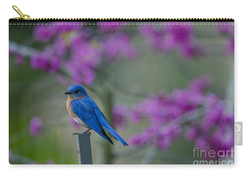 Blue Bird Carry-all Pouch featuring the photograph Spring Time Blue Bird by Dale Powell