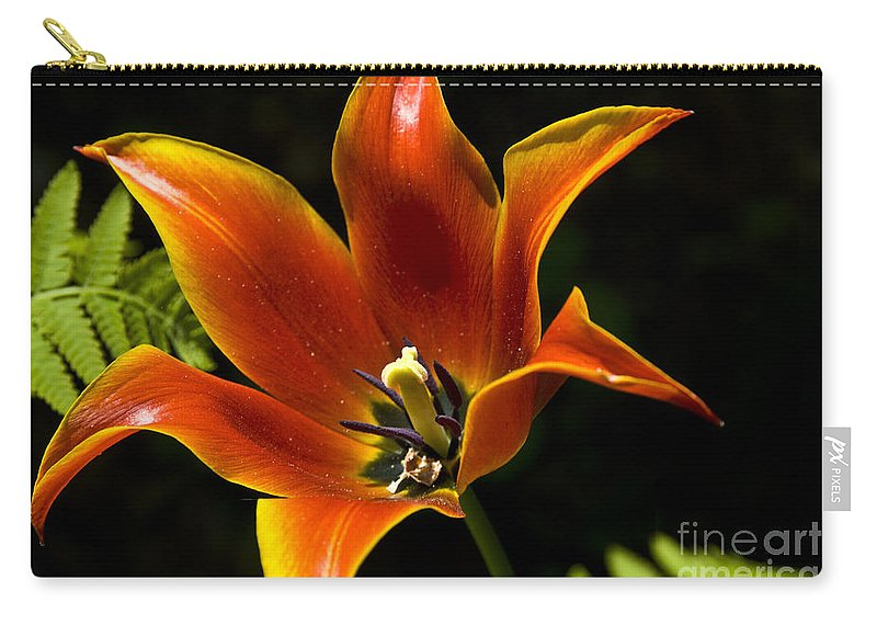 Flower Carry-all Pouch featuring the photograph Spring Tulip by Anthony Sacco