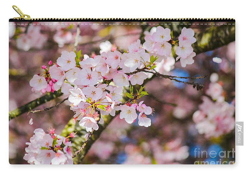 Cherry Blossoms Carry-all Pouch featuring the photograph Spring's First Blush by Patricia Babbitt