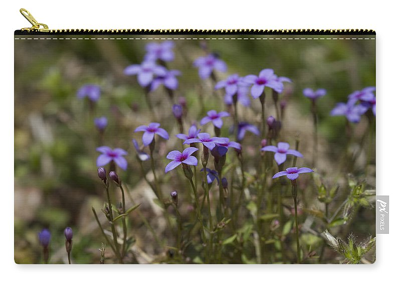Houstonia Pusilla Carry-all Pouch featuring the photograph Springtime Tiny Bluet Wildflowers - Houstonia Pusilla by Kathy Clark