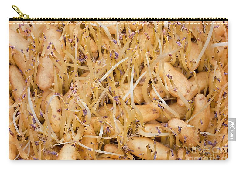 Agricultural Carry-all Pouch featuring the photograph Sprouting Russian Banana Fingerling Seed Potatoes by Stephan Pietzko
