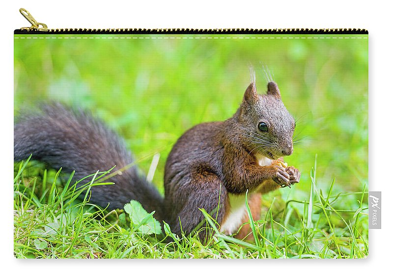 Nut Carry-all Pouch featuring the photograph Squirrel Eating A Nut In The Grass by Picture By Tambako The Jaguar