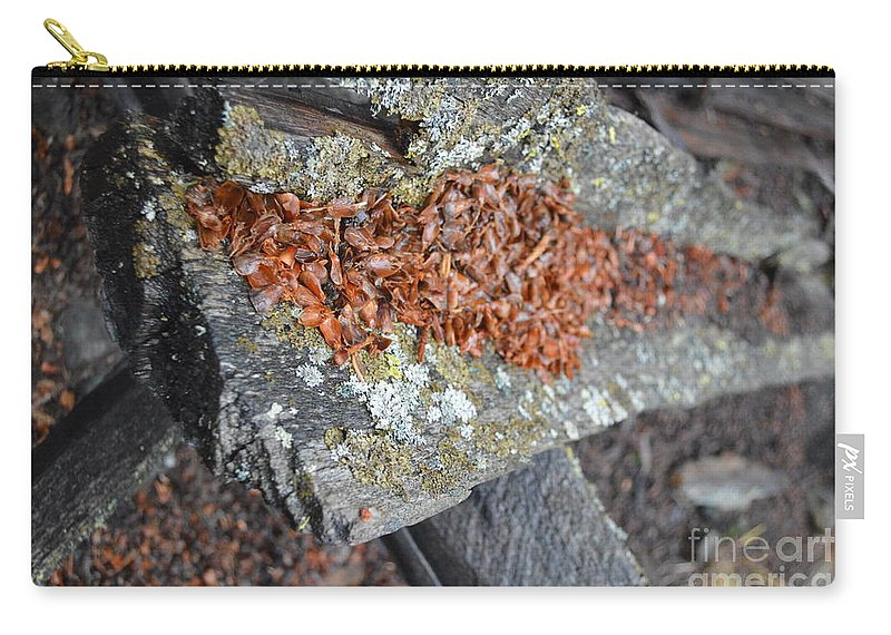 Squirrel Carry-all Pouch featuring the photograph Squirrel Fest by Brian Boyle