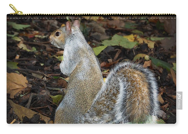 Squirrel Carry-all Pouch featuring the photograph Squirrel by Gina Dsgn